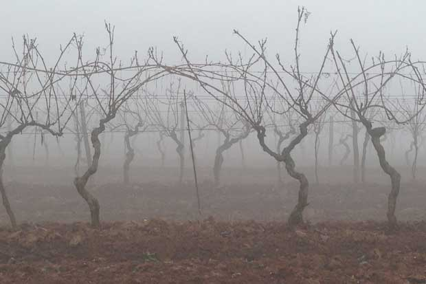 WInter mists in Istria
